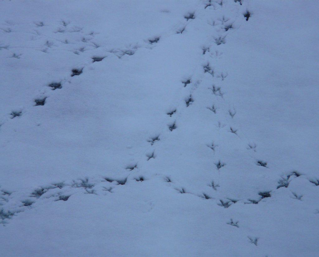 bird-tracks-91238_1280